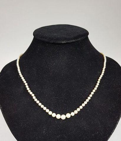 Collier de cent-quarante-quatre perles fines...