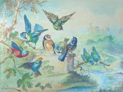 A. FAVELIER (XIXe-XXe siècle)  Oiseaux branchés....