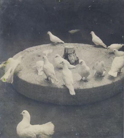 Laure ALBIN-GUILLOT (1879-1962). Colombes en cercle, 1941. Photographie signée et...