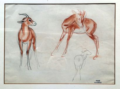 """André MARGAT (1903-1999) """"Etude de gazelles"""" Dessin au crayon et sanguine sur papier,..."""