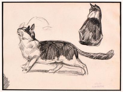 André MARGAT (1903-1999) Etude de « Chats...