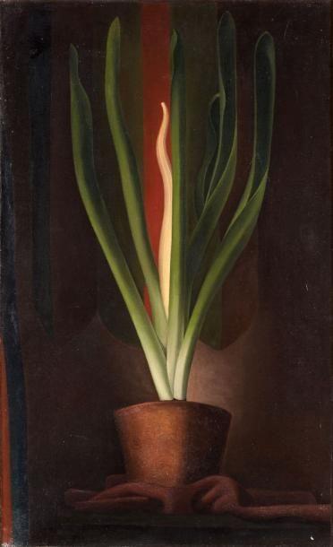 René RIMBERT (1896-1991). La plante magique,...