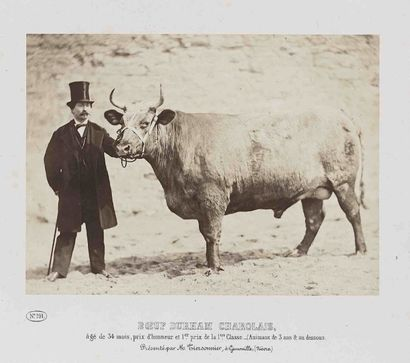 BAYARD (1801-1897) & BERTALL (1820-1882)....