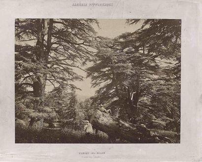 [ALGÉRIE PITTORESQUE]. Forêt des cèdres. Teniet-El-Haad. Algérie. Vers 1880. Épreuve...