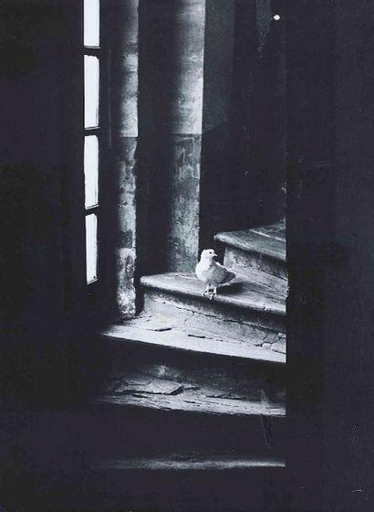 BRASSAÏ [Gyula Halász, dit] (1899-1984). Colombe sur la marche d'un escalier à Boisgeloup....