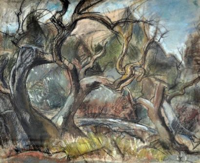 Willy EISENSCHITZ (1889-1974) Arbres en Provence....