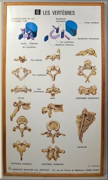 EDITION MALOINE  Reunion de 32 planches d'anatomie...