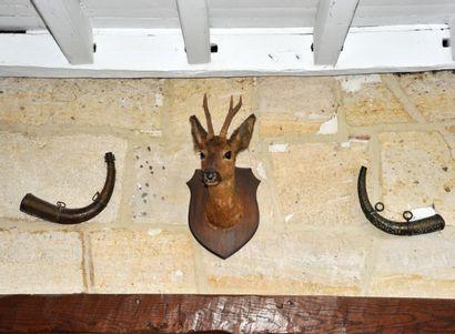 Tête de chevreuil naturalisée fixée sur plaque...