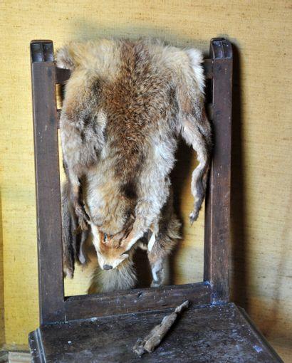 Peau de renard (accident) (longueur 108 ...
