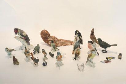 Collection d'oiseaux, XXe, principalement...