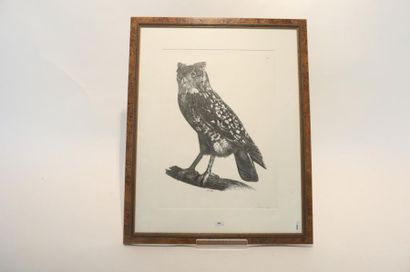 Deux estampes ornithologiques (
