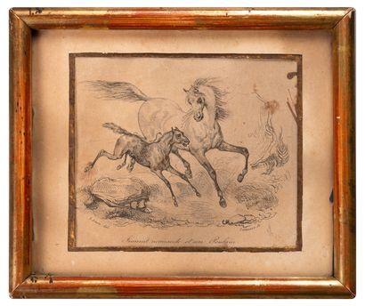 Jument normande et son poulain  Petite gravure...