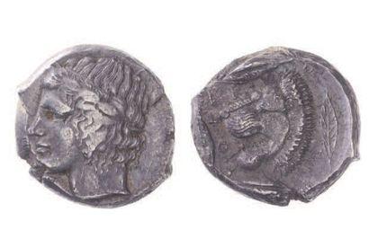 SICILE, Camarina (413-405). Statère (8,26...