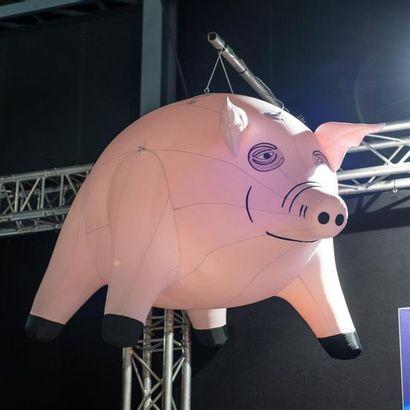 Cochon Pink Floyd Décors'