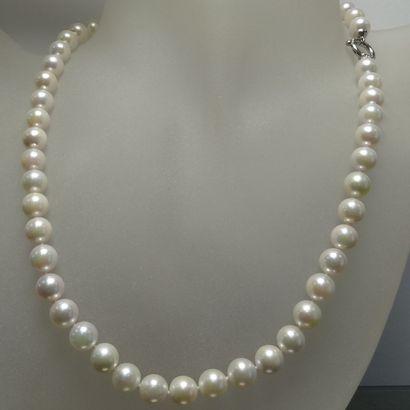 Collier à un rang de perles de culture AKOYA...