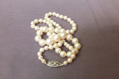 Collier de perles de culture japonaises en...