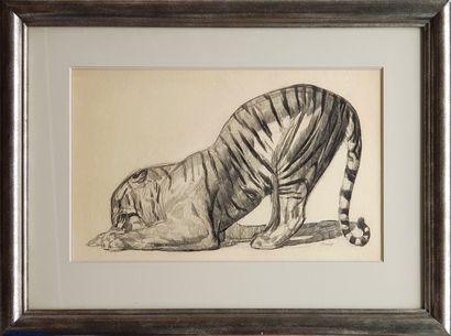 Paul JOUVE (1878-1973) Tigre Dessin au fusain 28 x 46 cm (à vue), (50 x 67 cm avec...