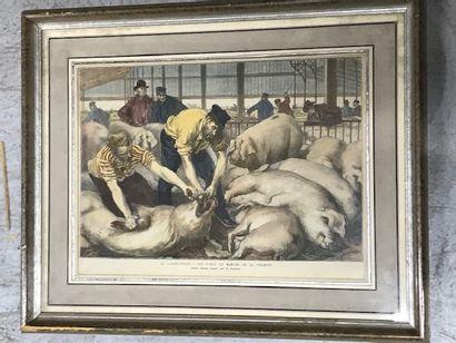 Gravure couleur langueyage des porcs au marché de la Villette  Dim. : 24,5 x 32...