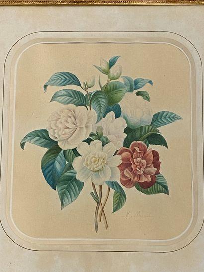 M. BRANDIN  Etude de fleurs  Aquarelle sur...