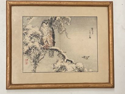 JAPON  Faucon branché  Peinture sur papier,...
