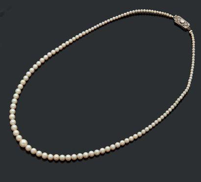 Collier de perles (fines?), fermoir en alliage...