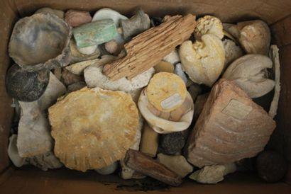 Important ensemble de fossiles divers.