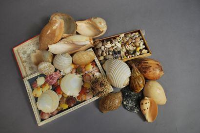Ensemble de coquillages de diverses formes...