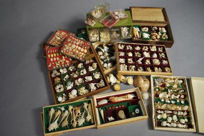 Ensemble de boîtes comprenant des coquillages,...