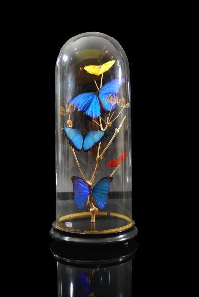 Ensemble de papillons traités au naturel...