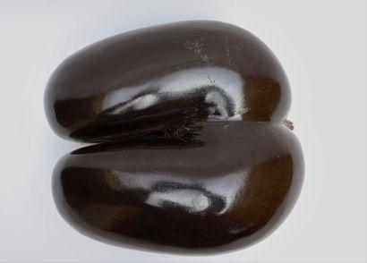 Coco-fesse ou Cocotier de mer (Lodoicea maldivica) (III/C) : considéré comme la...