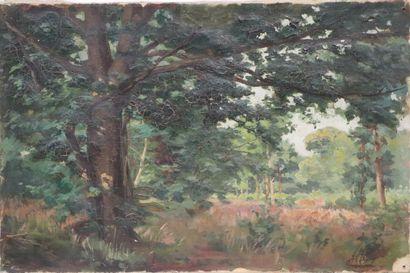 Henri DIF (1864-1929).  Sous-bois.  Huile...