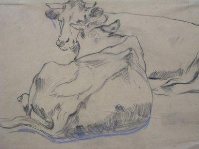 CHIALIVA LUIGI (1842-1914) Deux vaches au repos Fusain, cachet en bas à droite. 25...