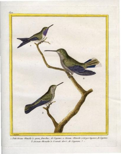 [Oiseau-mouche ]. -