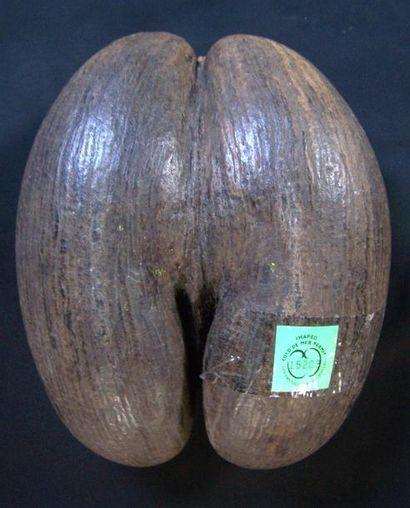 COCO FESSE des Seychelles sur socle. Pastille...
