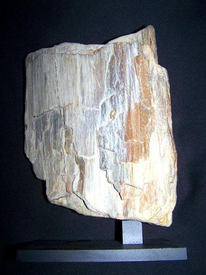 BOIS fossile jaspé de l'Oise sur socle. L:...