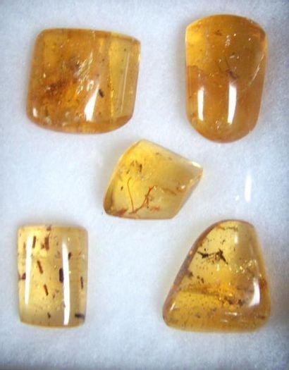 Magnifique lot de CINQ BLOCS d'ambre avec...