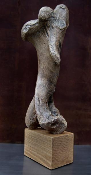 Très sculptural HUMÉRUS de rhinocéros laineux...