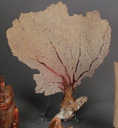 DEUX GORGONES de Madagascar. H: 40 et 45...