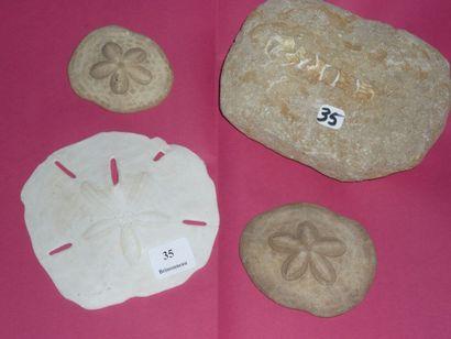 Lot: Trois ENCOPES grandis pléistocène (100...