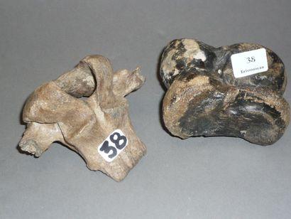 Lot: Un ASTRAGALE de bison (100 00 ans)....