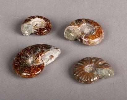 Lot de quatre ammonites opalisées.Diam. de 3 à 5 cm