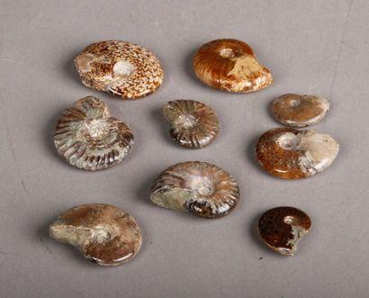 Lot de neuf ammonites opalisées et nacrées....