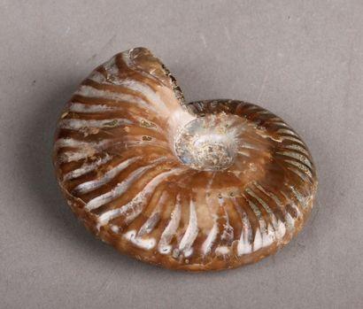 Ammonite opalisée et nacrée. Diam. 7 cm
