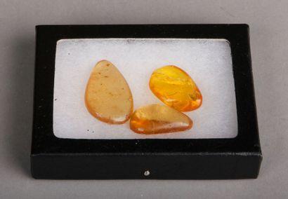 Trois morceaux d'ambre contenant des insectes...