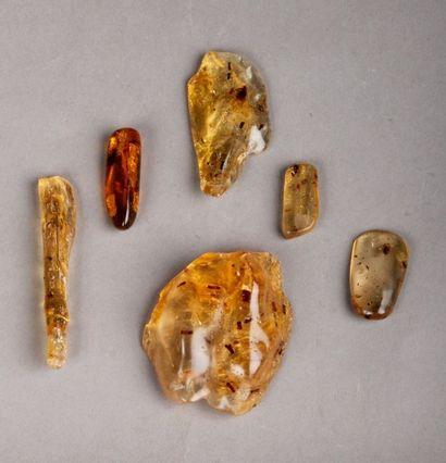 Collection de six morceaux d'ambre enfermant...