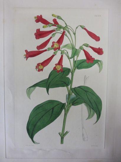 LOT COMPRENANT:  FITCH; gravure florale...