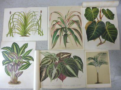 14 GRAVURES DE PLANTES ET DE FLEURS En couleur...