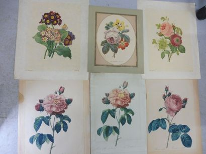 REDOUTE (d'après) 6 études de fleurs Gravure...
