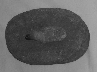 DENT DE MOSASAURE fossilisée et enchassée...