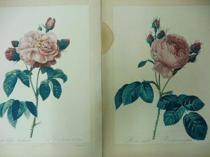 REDOUTE (d'après) ''études de fleurs'' –...